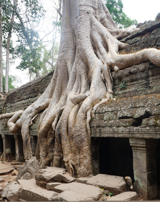 Ta Phrom - location of Tomb Raider with Angelina Jolie